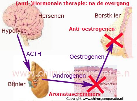 hormoontherapie_postmenop_15